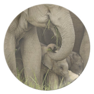 Indian / Asian Elephant and young one,Corbett 3 Plate