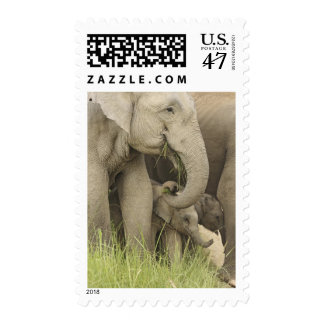 Indian / Asian Elephant and young one,Corbett 3 Postage