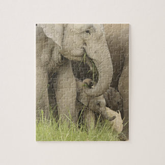 Indian / Asian Elephant and young one,Corbett 3 Puzzle