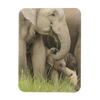 Indian / Asian Elephant and young one,Corbett 3 Rectangular Photo Magnet