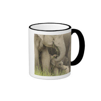 Indian / Asian Elephant and young one,Corbett 3 Ringer Mug