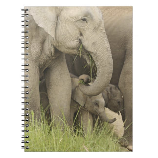 Indian / Asian Elephant and young one,Corbett 3 Spiral Notebook