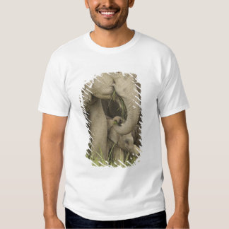 Indian / Asian Elephant and young one,Corbett 3 T-shirt