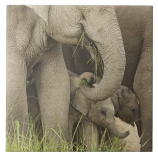 Indian / Asian Elephant and young one,Corbett 3 Tile