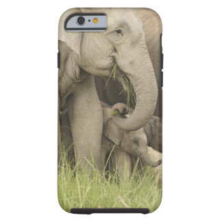 Indian / Asian Elephant and young one,Corbett 3 Tough iPhone 6 Case
