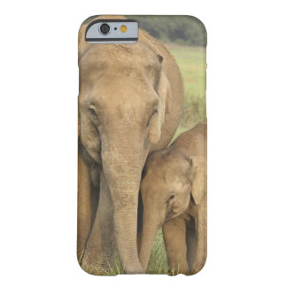 Indian / Asian Elephant and young one,Corbett Barely There iPhone 6 Case