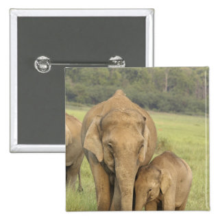 Indian / Asian Elephant and young one,Corbett Button