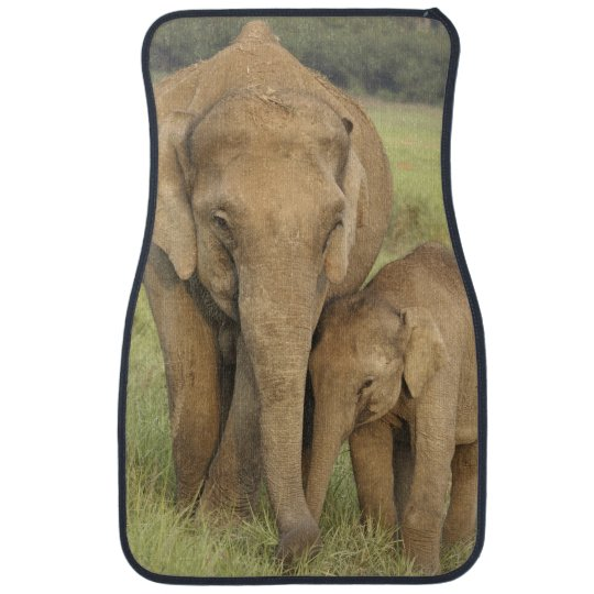 Indian Asian Elephant And Young One Corbett Car Floor