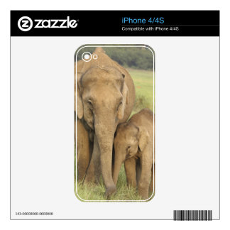 Indian / Asian Elephant and young one,Corbett Decal For The iPhone 4S