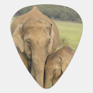 Indian / Asian Elephant and young one,Corbett Guitar Pick