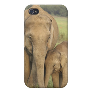 Indian / Asian Elephant and young one,Corbett iPhone 4 Cover