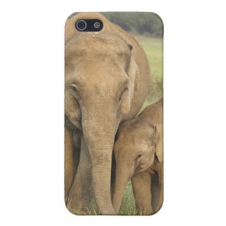 Indian / Asian Elephant and young one,Corbett iPhone SE/5/5s Cover