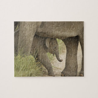 Indian / Asian Elephant and young one,Corbett Jigsaw Puzzle