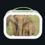"Indian / Asian Elephant and young one,Corbett Lunch Box<br><div class=""desc"">Indian / Asian Elephant and young one, Corbett National Park,  Uttaranchal,  India   Jagdeep Rajput / DanitaDelimont.com</div>"