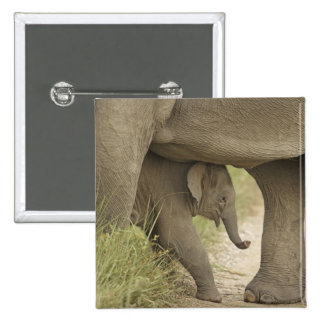 Indian / Asian Elephant and young one,Corbett Pinback Button