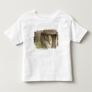 Indian / Asian Elephant and young one,Corbett Shirt