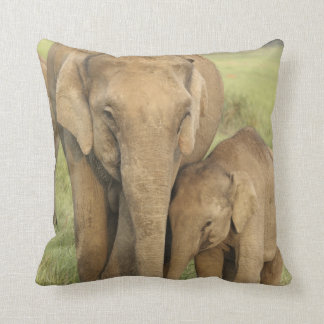 Indian / Asian Elephant and young one,Corbett Throw Pillow