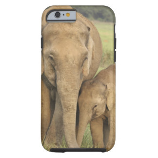 Indian / Asian Elephant and young one,Corbett Tough iPhone 6 Case
