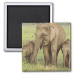 Indian / Asian Elephant and young ones,Corbett 2 Inch Square Magnet