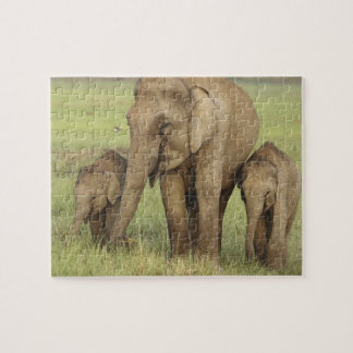 Indian / Asian Elephant and young ones,Corbett Jigsaw Puzzle