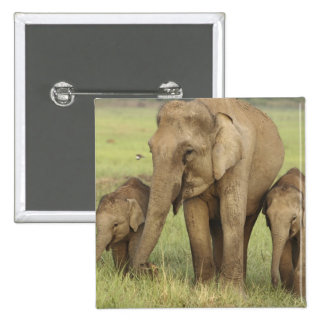 Indian / Asian Elephant and young ones,Corbett Pinback Button