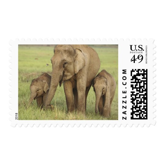 Indian / Asian Elephant and young ones,Corbett Postage