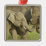 Indian / Asian Elephant asking for food;Corbett Christmas Tree Ornaments