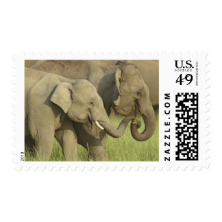 Indian / Asian Elephant asking for food;Corbett Postage Stamp