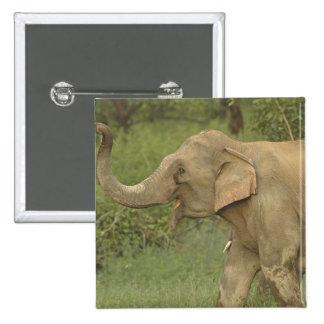 Indian / Asian Elephant communicating,Corbett 2 Pinback Button