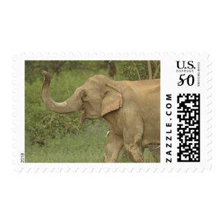 Indian / Asian Elephant communicating,Corbett 2 Postage