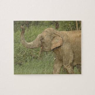 Indian / Asian Elephant communicating,Corbett 2 Puzzle