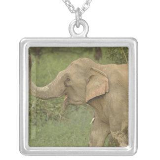 Indian / Asian Elephant communicating,Corbett 2 Square Pendant Necklace