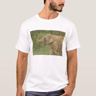 Indian / Asian Elephant communicating,Corbett 2 T-Shirt