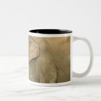 Indian / Asian Elephant communicating,Corbett 2 Two-Tone Coffee Mug