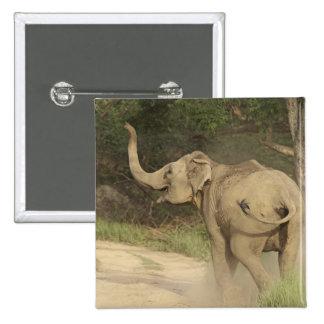 Indian / Asian Elephant communicating,Corbett Pinback Button