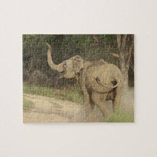 Indian / Asian Elephant communicating,Corbett Puzzle