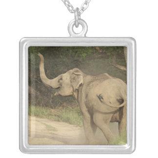 Indian / Asian Elephant communicating,Corbett Square Pendant Necklace