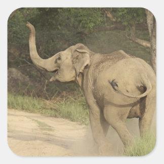 Indian Asian Elephant communicating Corbett Square Stickers