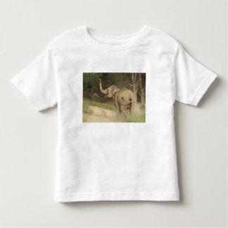 Indian / Asian Elephant communicating,Corbett T Shirt