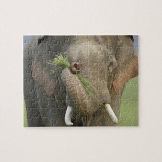 Indian / Asian Elephant displaying food,Corbett 2 Jigsaw Puzzle
