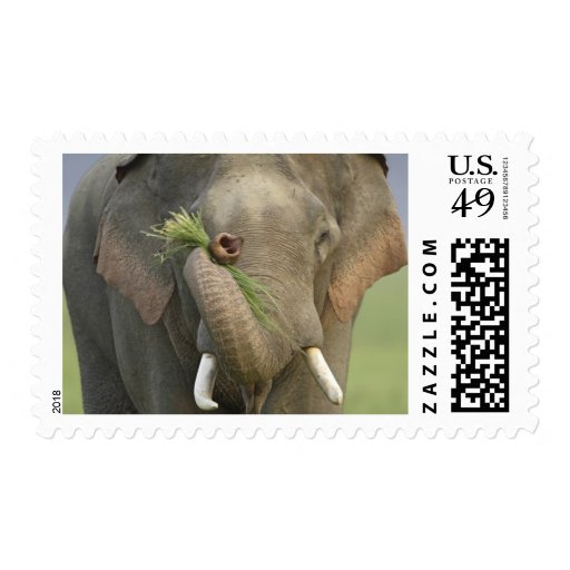 Indian / Asian Elephant displaying food,Corbett 2 Postage