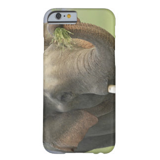 Indian / Asian Elephant displaying food,Corbett Barely There iPhone 6 Case