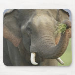 Indian / Asian Elephant displaying food,Corbett Mouse Pad