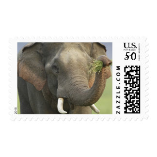 Indian / Asian Elephant displaying food,Corbett Postage