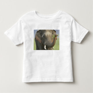 Indian / Asian Elephant displaying food,Corbett Shirt