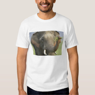 Indian / Asian Elephant displaying food,Corbett T-shirt