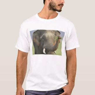 Indian / Asian Elephant displaying food,Corbett T-Shirt