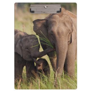Indian Asian Elephant family in the savannah Clipboard