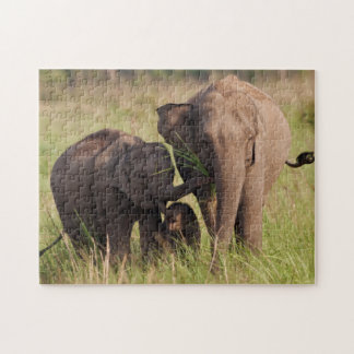 Indian Asian Elephant family in the savannah Puzzle