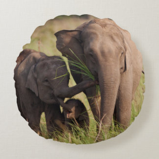 Indian Asian Elephant family in the savannah Round Pillow